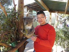 Phillip Island: Penguins, Koalas and Kangaroos Day Tour from Melbourne - Melbourne | Viator