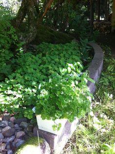 Tossa on jotain vihreetä ja jotain kivee siinä näkyy myös. Plants, Plant, Planets