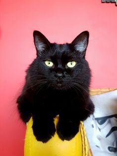 #cat #pet #gata