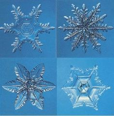 A Real Snowflake under a Caltech scientist's specially designed photo microscope. Description from pinterest.com. I searched for this on bing.com/images