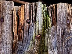 Wood photography