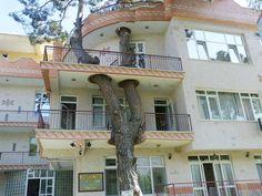 最初に木があった建物