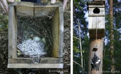 bird got hung because of rope in her nest. don't leave ropes/strings in the nature! cut then before throwing away