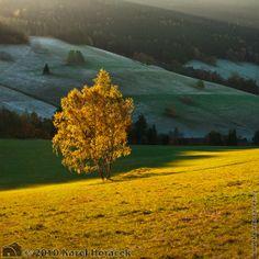 Prosluněné břízy, Horní Albeřice, Krkonoše
