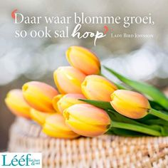 Morning Wish, Afrikaans, Morning Quotes, Words, Kisses, Motivational, Wisdom, Inspirational, Flower