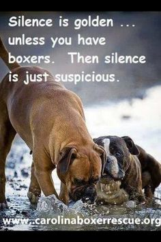boxers... dobies... GSDs... any other breed... mutt... Heintz 57s...