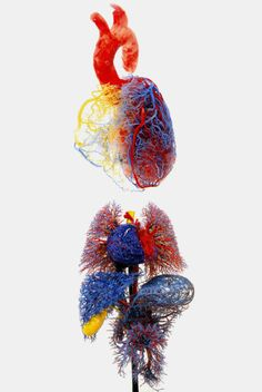 Gunther von Hagens - cast of heart, lungs, liver, gall bladder & stomach.