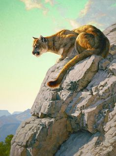 Greg Beecham has been painting full time since He has specialized in wildlife art. Wildlife Paintings, Wildlife Art, Animal Paintings, Animal Drawings, Horse Drawings, Pumas Animal, Wind Wolves, Big Cats Art, West Art