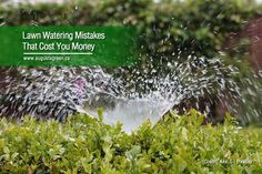 Lawns are a great addition to your property. However, they can be high-maintenance & costly — especially if watering is not done right. Find what watering mistakes you may be committing to make sure your lawn remains healthy & lush. Types Of Grass, Lawn Service, Water Management, High Maintenance, Photosynthesis, Lawns, Water Systems, Irrigation