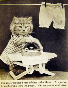 Harry W. Frees cat ironing| Flickr - Photo Sharing!