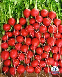 Radish Rivoli  2014 AAS Vegetable Award Winner
