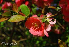 весна, цветы, макро