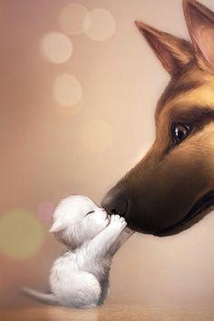 Cat & Dog ❤️