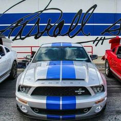 Mustang Gt Shelby