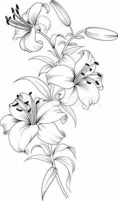 Ilona Trelej (notitle) Ilona Trelej The post Ilona Trelej appeared first on Blumen ideen. Pencil Art Drawings, Art Drawings Sketches, Pencil Drawings Of Flowers, Lilies Drawing, Drawing Flowers, Lilly Flower Drawing, Flower Design Drawing, Floral Drawing, Lotus Drawing