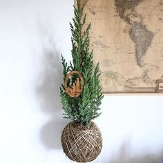 #TBNCo // sleigh bells ring, are you listening? // How about doing Christmas a little different this year and have a real life mini-pine tree that smells oh-so-fresh?! This pretty stands at about 60cm tall and is the perfect Christmas centrepiece for tiny living. // $70 // Only 5 available through our online store, friends! x x