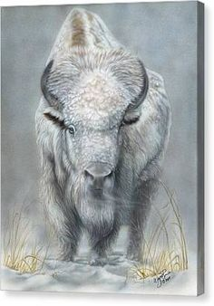 White Buffalo Art Print by Wayne Pruse. All prints are professionally printed, packaged, and shipped within 3 - 4 business days. Choose from multiple sizes and hundreds of frame and mat options. Native American Animals, Native American Decor, Native American Paintings, Native American Images, American Bison, American Indian Art, American History, Buffalo Painting, Buffalo Art