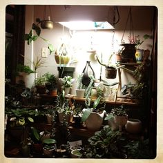 Amateur Bot-ann-ist: The Plant / Music / Writing Room is Growing