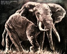 African Elephant - Chalk on Black Board by Vincent Kennard