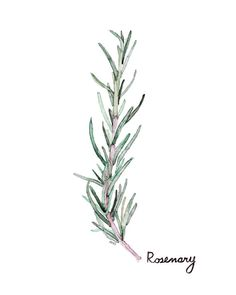Rosemary Herb Painting  Print from my by TheColorfulCatStudio
