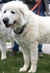 www.bigdogshugepaws.com