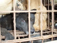 PETITION: NOBODY TOUCH THE DOG - STOP DOG CRUELTY AND TORTURES IN CHINA  July 9 · Started by Sergio Barbesta
