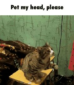 Pet my head, please