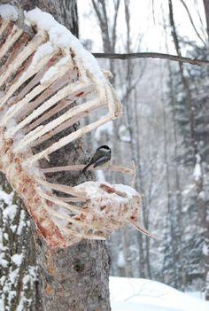 Bones as branches. Death Aesthetic, Nature Aesthetic, Animal Bones, Vulture, Skull And Bones, Memento Mori, Dark Art, Creepy, Horror
