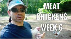 Raising Meat Chickens WEEK 6- Broilers - Cornish Cross