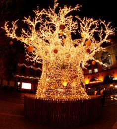 "A very Happy Holiday Season and Thank You to all my wonderful ""On Safari"" Followers ~ Cinda   ~ African Christmas Tree"