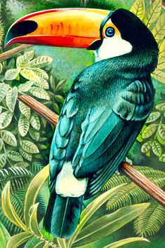high detail acrylic illustration of rainforest animals. Parrot Painting, Painting & Drawing, Bird Drawings, Animal Drawings, Rainforest Animals, Tropical Art, Color Pencil Art, Exotic Birds, Animal Paintings