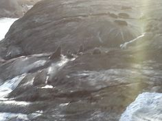 seals at play in Doubtful Sound