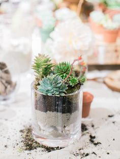Succulents + Terrarium + Pottery Barn Clear Glass Vase in San Diego | Workshop by Colonial House of Flowers | Photography by Savan Photography