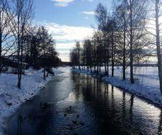 Ducks are enjoying the cold in Lindesberg, Sweden [OC] [4128x3096]