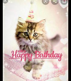 Happy Birthday Kitten, Late Happy Birthday Wishes, Cat Birthday Memes, Happy Birthday Pictures, Happy Birthday Messages, Birthday Quotes, Funny Birthday, Cat Birthday Wishes, Birthday Cats