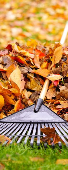 #HHExpertAdvice: Leaves are great compost for your #garden. Rake the #leaves off your lawn, mulch them with your lawn mower and spread them onto your garden.
