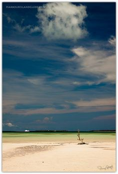 Girls Bank on Harbour Island, Bahamas. Famous Lone Tree in the background. Click through image to learn more about Harbour Island.