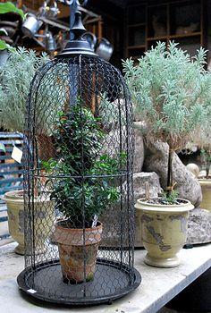 Til afskærmning af stauder fx. Wire Cloche | Online Garden Store