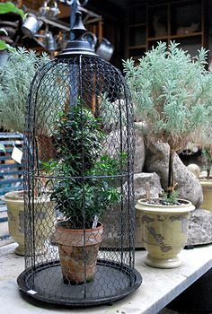 Wire Cloche   Online Garden Store