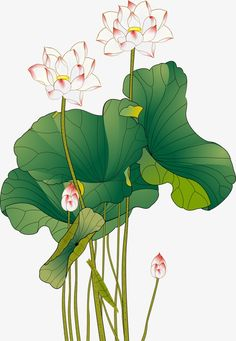 Watercolor Lotus, Watercolor Flowers, Botanical Drawings, Botanical Prints, Colorful Animal Paintings, Hd Flowers, Chinese Art, Chinese Style, Traditional Chinese