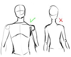 Reference for drawing a male upper body