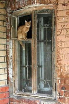 Top 25 Cute Kittens and Funny Cats Crazy Cat Lady, Crazy Cats, Beautiful Cats, Animals Beautiful, Animals And Pets, Cute Animals, Cat Window, Window View, Open Window