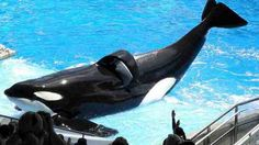 STOP ORCA CAPTIVITY BY 2020