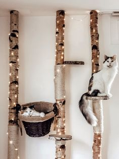 Birch scratching post - Watch out for cat lovers our white cleaned birch trees are perfect for DIY cat trees now at Birkend - Animal Room, Cat House Diy, Diy Cat Tree, Cat Perch, Cat Shelves, Cat Playground, Cat Room, Pet Furniture, Cat Wall
