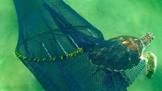 A Fishing Gear Design Competition to Reduce Bycatch