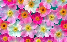 pics of flowers | ... desktop laptop or gadget flowers pink wallpaper is part of the flowers