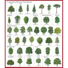 Image result for examples of leaf types foliage descriptions