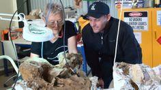 Removing rocky matrix from a sauropod vertebrae at Australian Age of Dinosaurs preparatory laboratory. Winton, QLD. #fossil #aaod #dinosaur #science