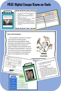Grab this FREE digital Escape Room on Owls! Great for Remote Learning! Students read informational text on owls and answer the questions to breakout! Students love digital escape rooms! Elementary Science, Science Classroom, Elementary Education, Upper Elementary, Weather And Climate, Space And Astronomy, Student Reading, Escape Room, Life Science