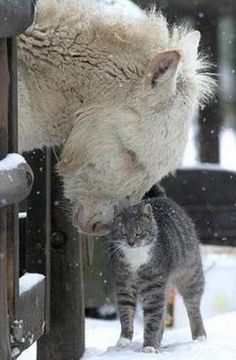 Unlikely animal friends   odd couples   animals     pets   #pets  #animals   https://biopop.com/